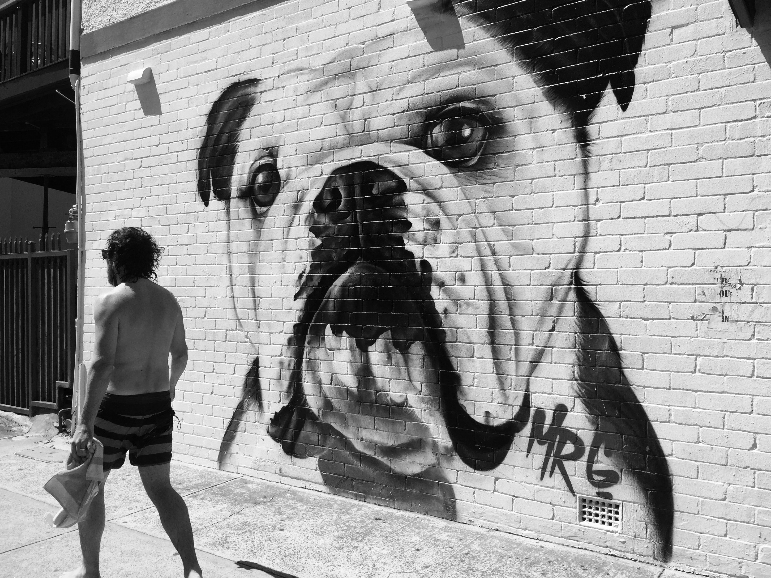 A white bulldog painted on a brick wall.