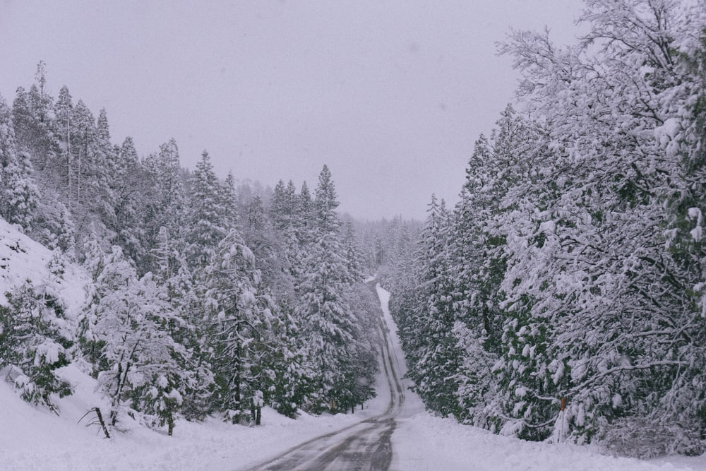 empty road between forest during winter