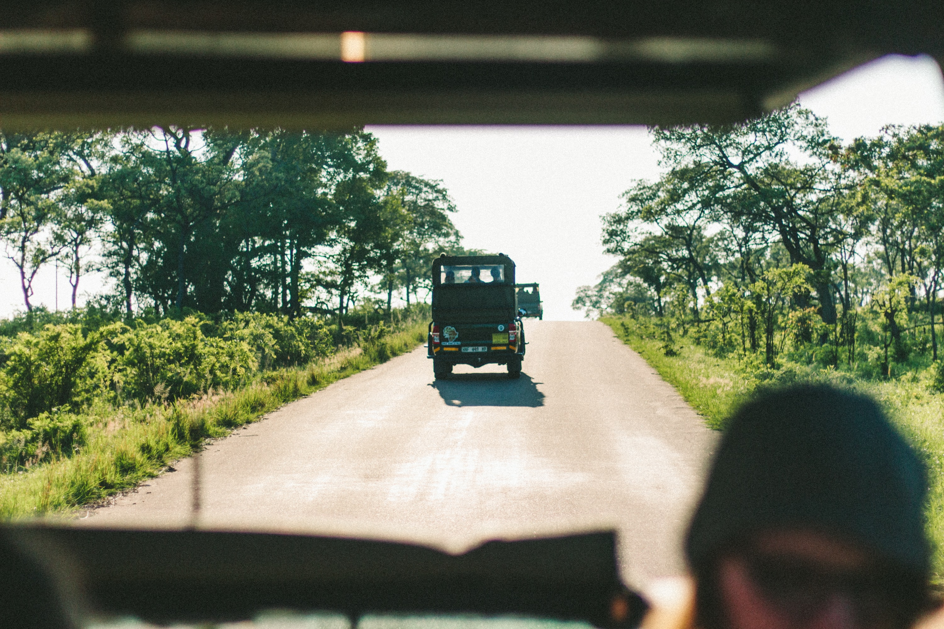 View from a jeep in a caravan of vehicles driving through the Kruger National Park