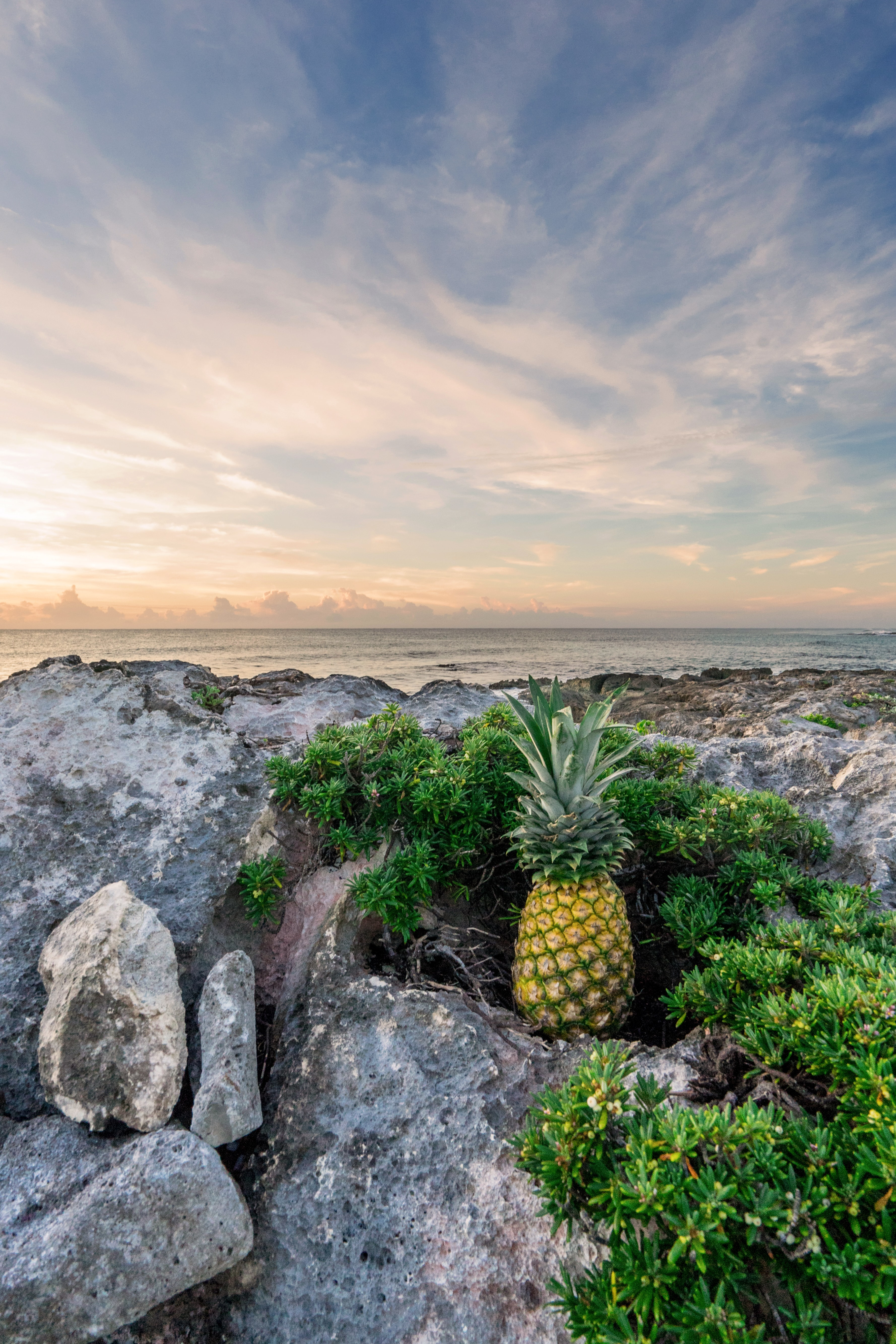 Pineapple sitting among rock formations at the beach.