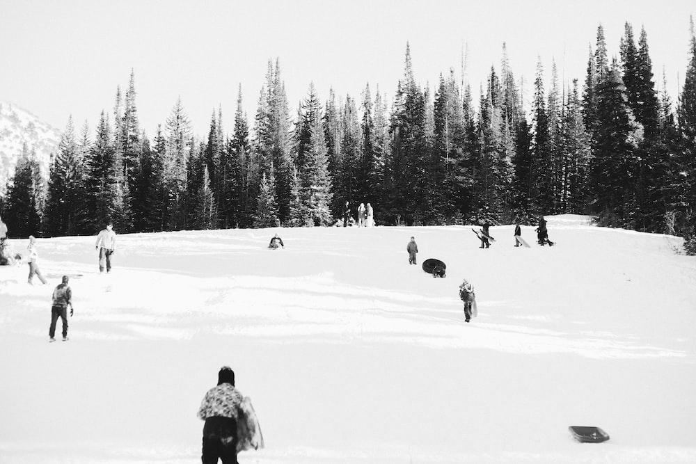 people skiing during daytime
