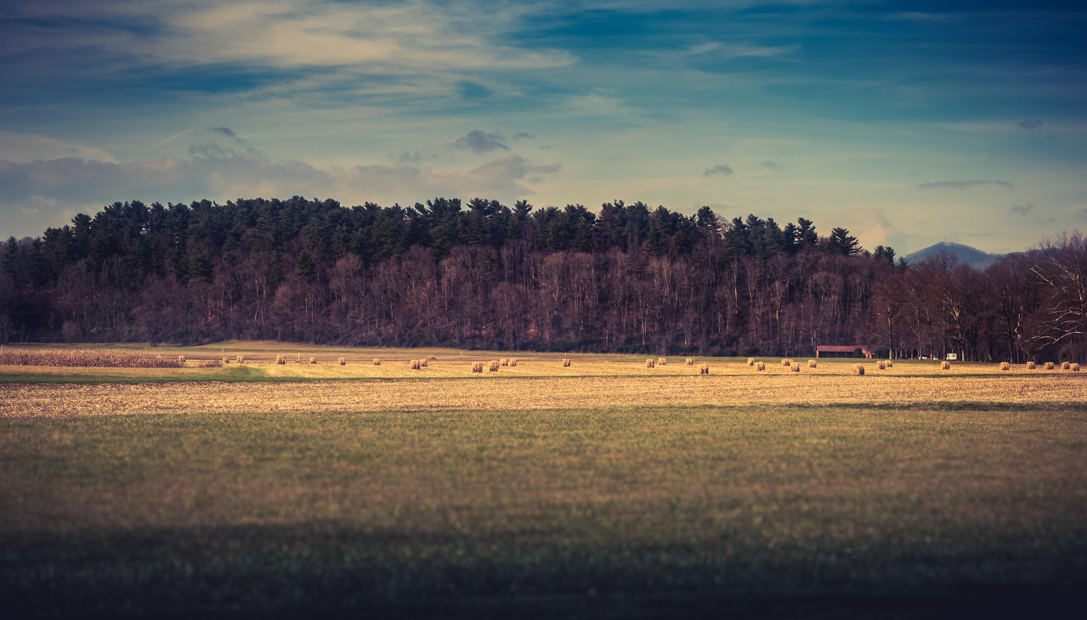 Hay bales in a golden field in Biltmore