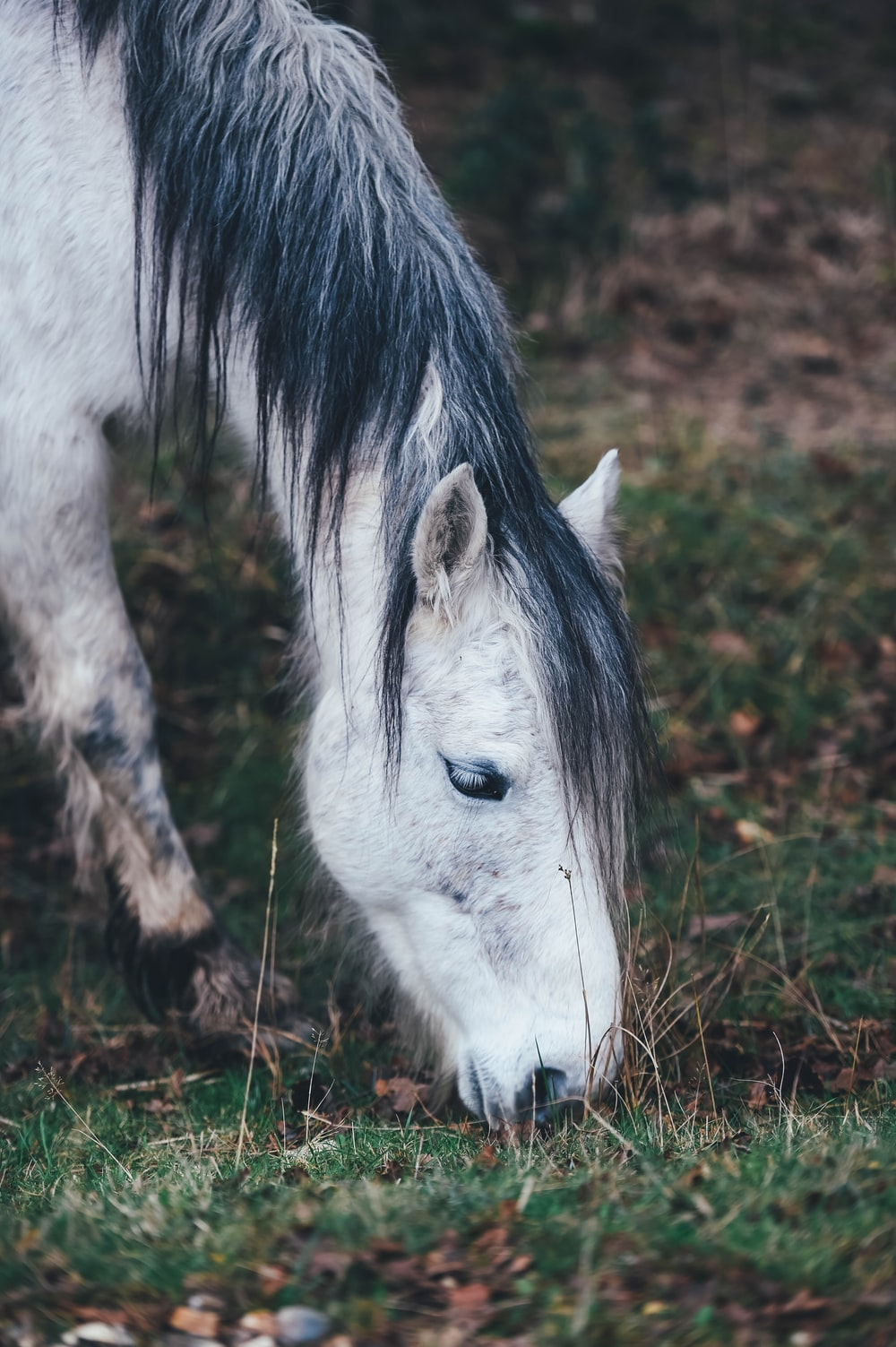 white horse grazing on grass in selective focus photography