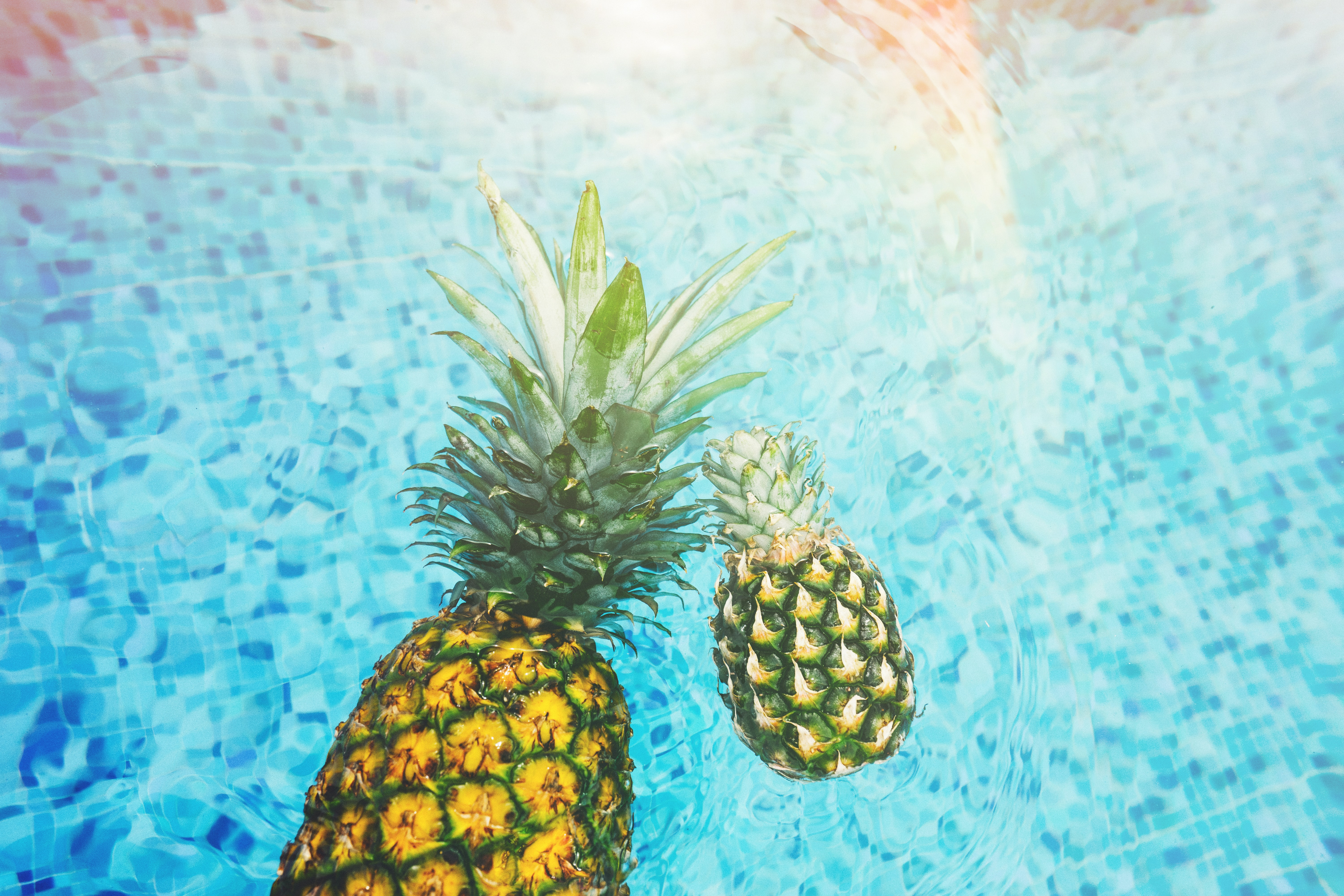 Fresh pineapples floating in a blue pool