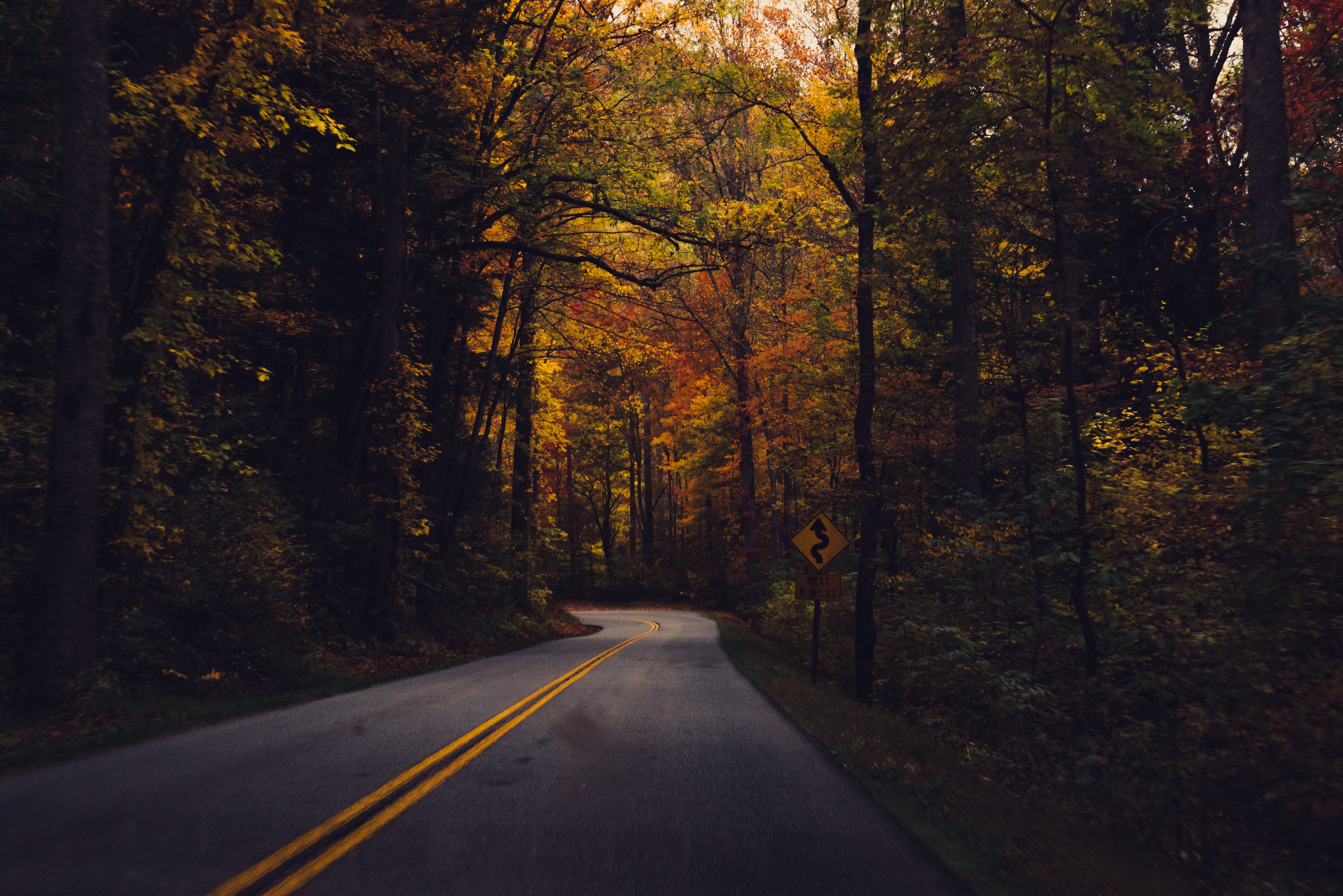 A turn in a tree-lined road in the Great Smoky Mountains in autumn