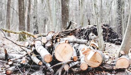 photo of cut wood log lot