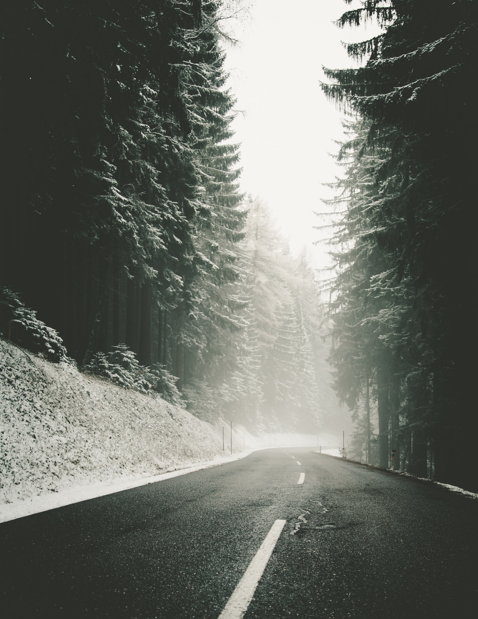 A blacktop road winding through a snowy evergreen forest