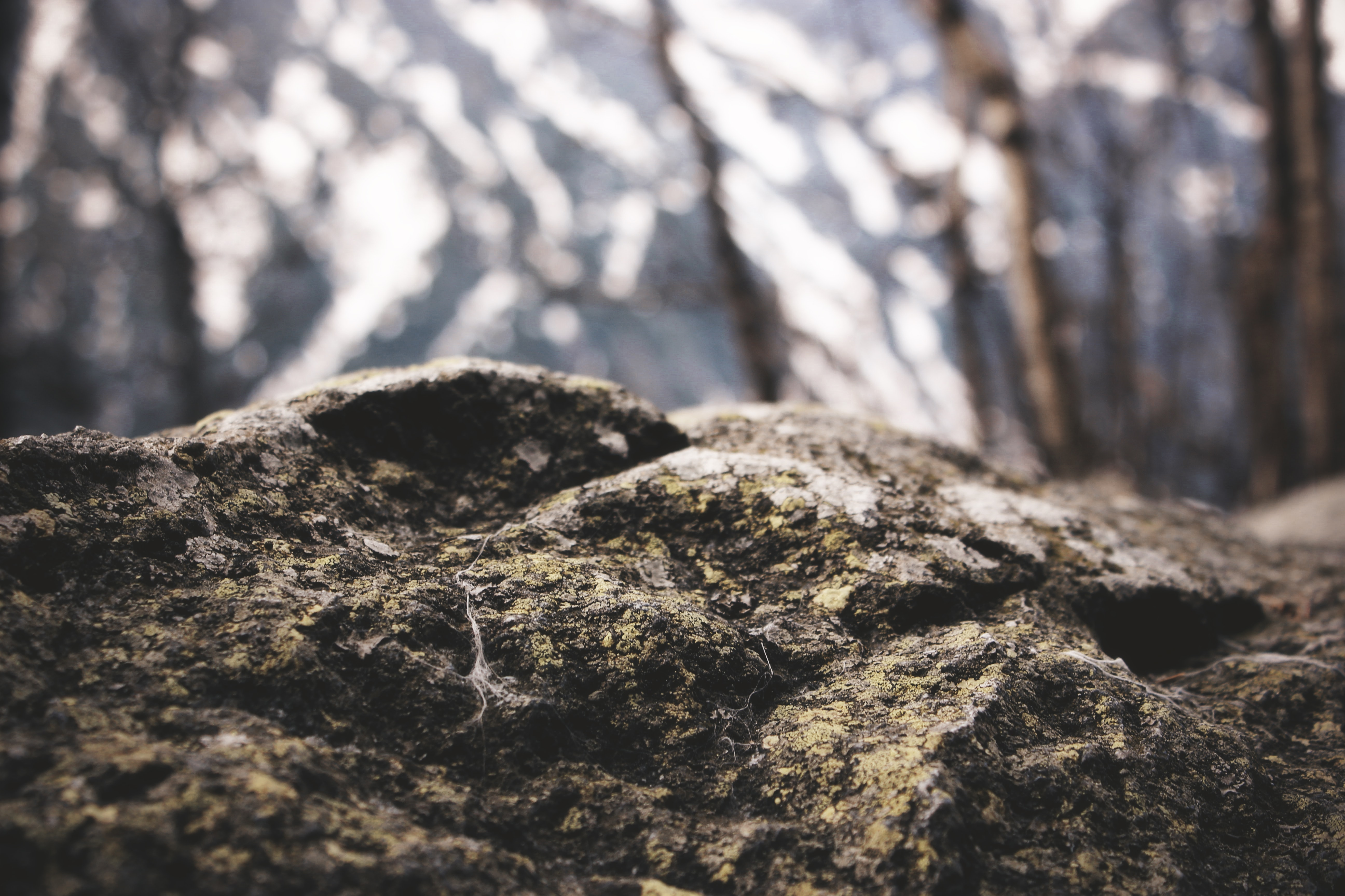 shallow focus photography of brown stone
