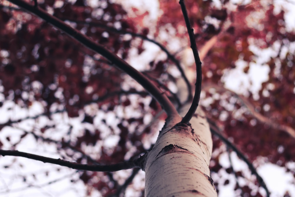 low-angle photography of brown leafed tree at daytime