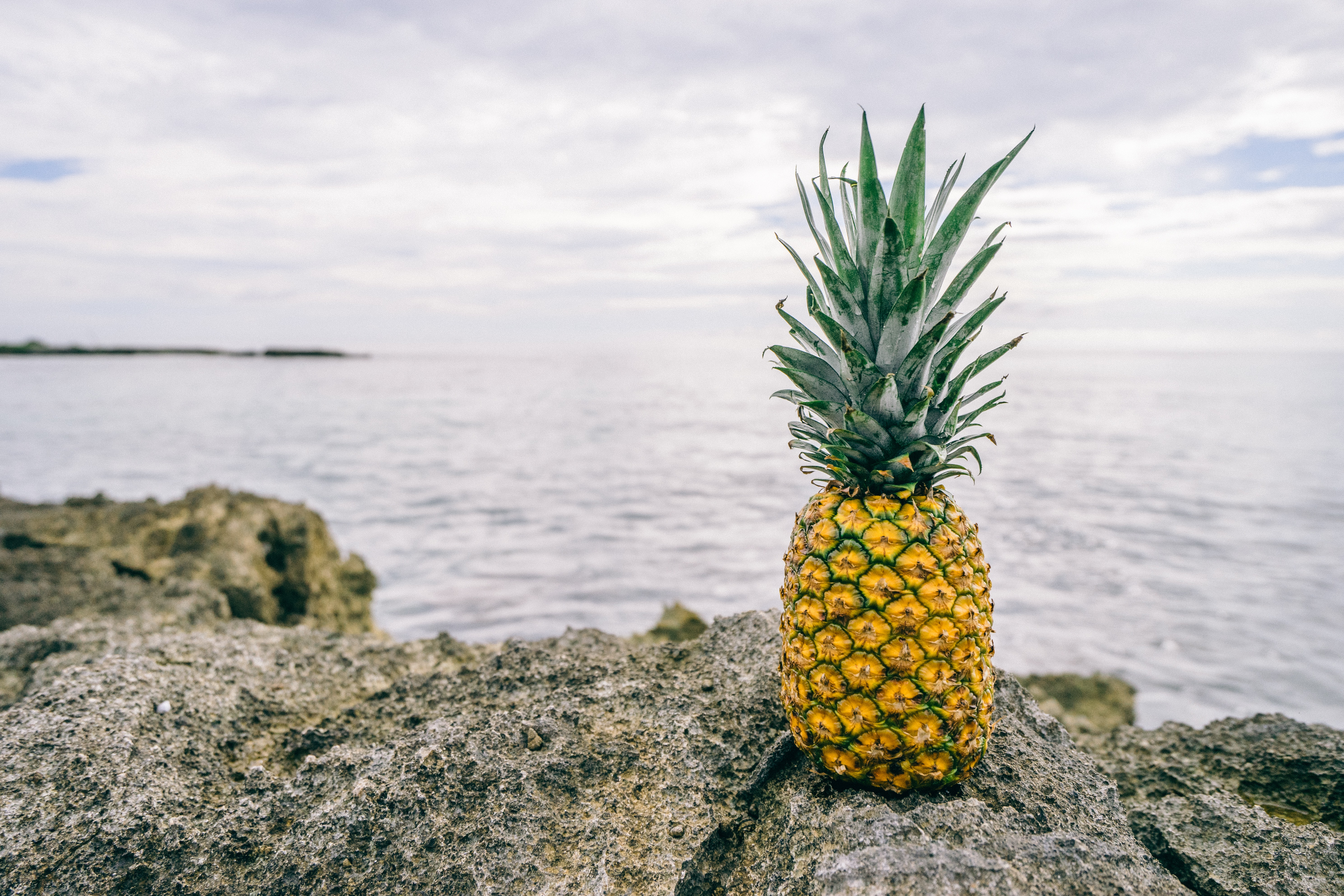 photo of pineapple on rock