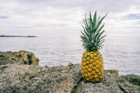 pineapple on the rocks