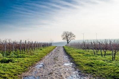 4610. Bor,szőlő, borászatok
