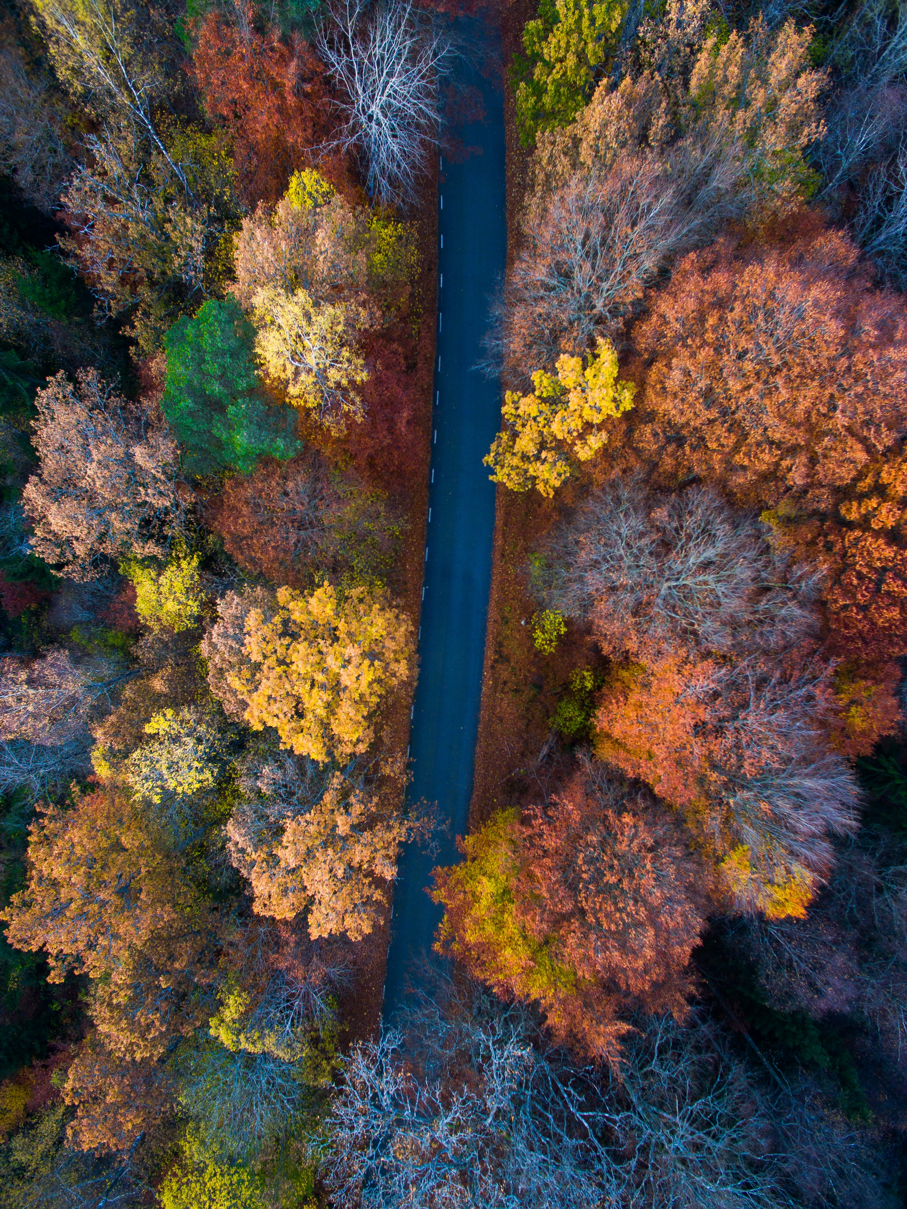 A drone shot of a road between rows of autumn trees
