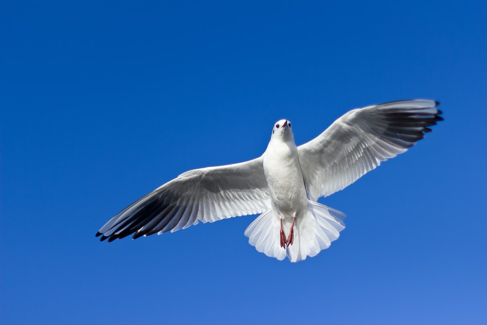 white and gray bird flying on top