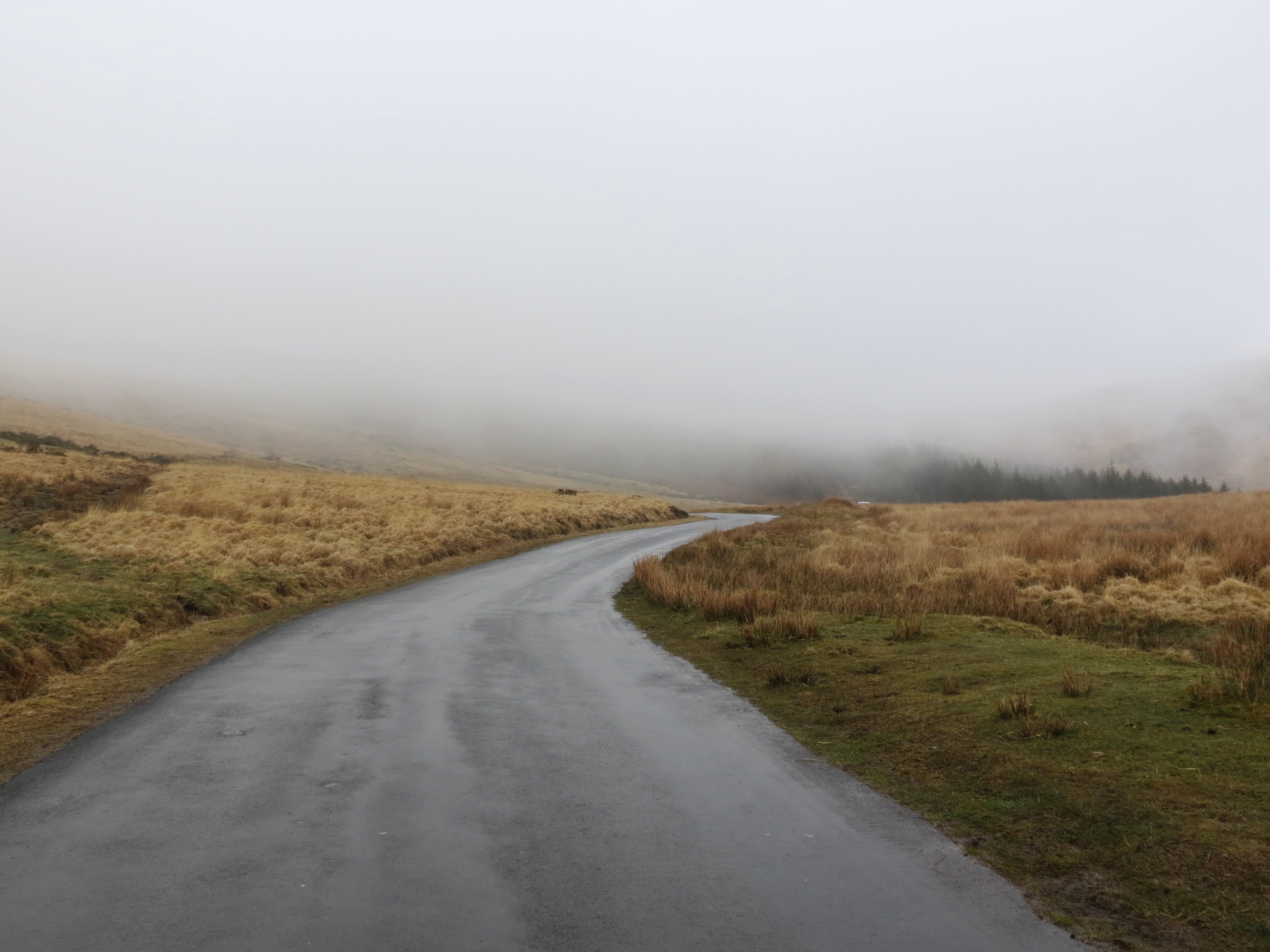 concrete road leading to misty forest
