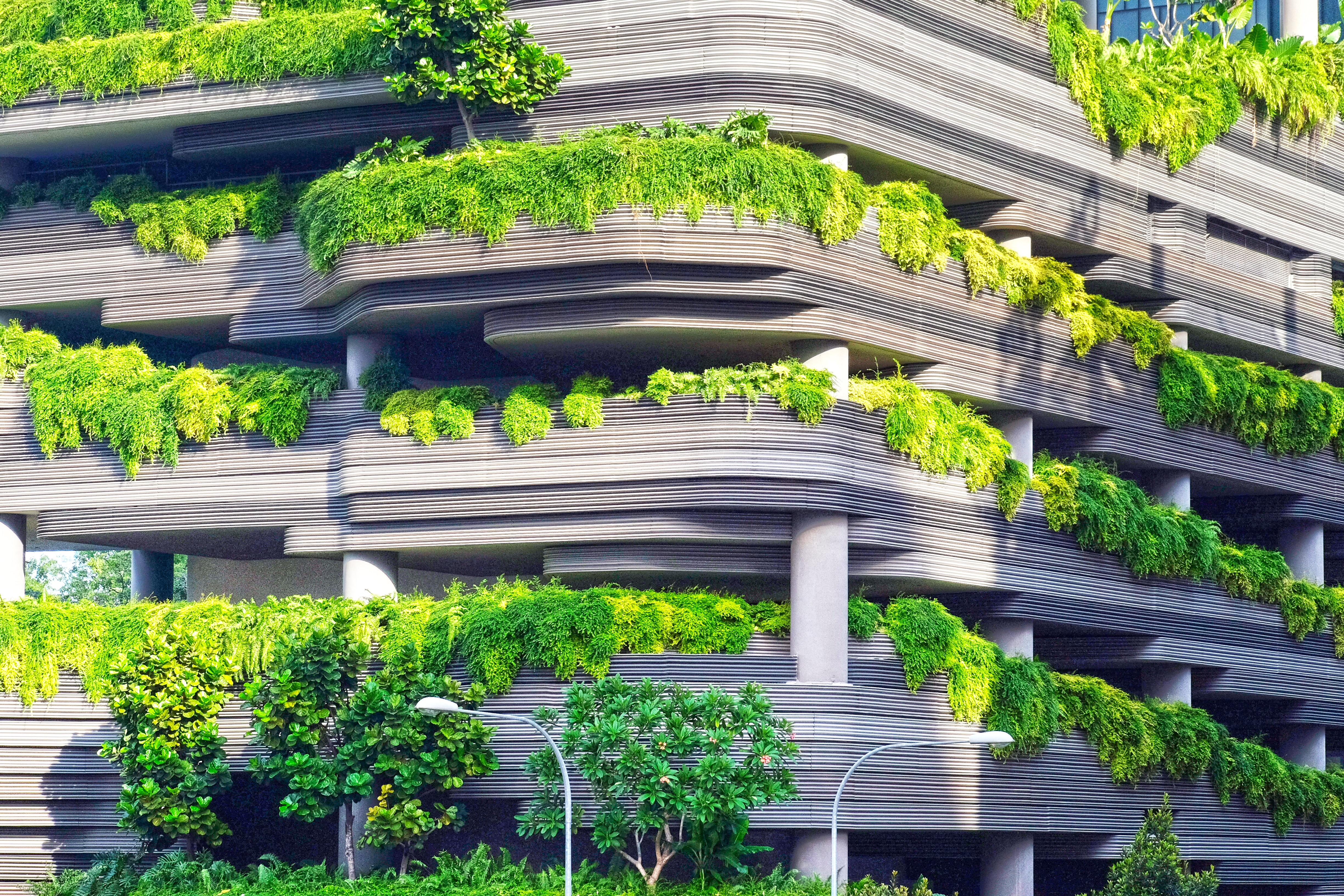 Green plants covering the walls of a multi-story building