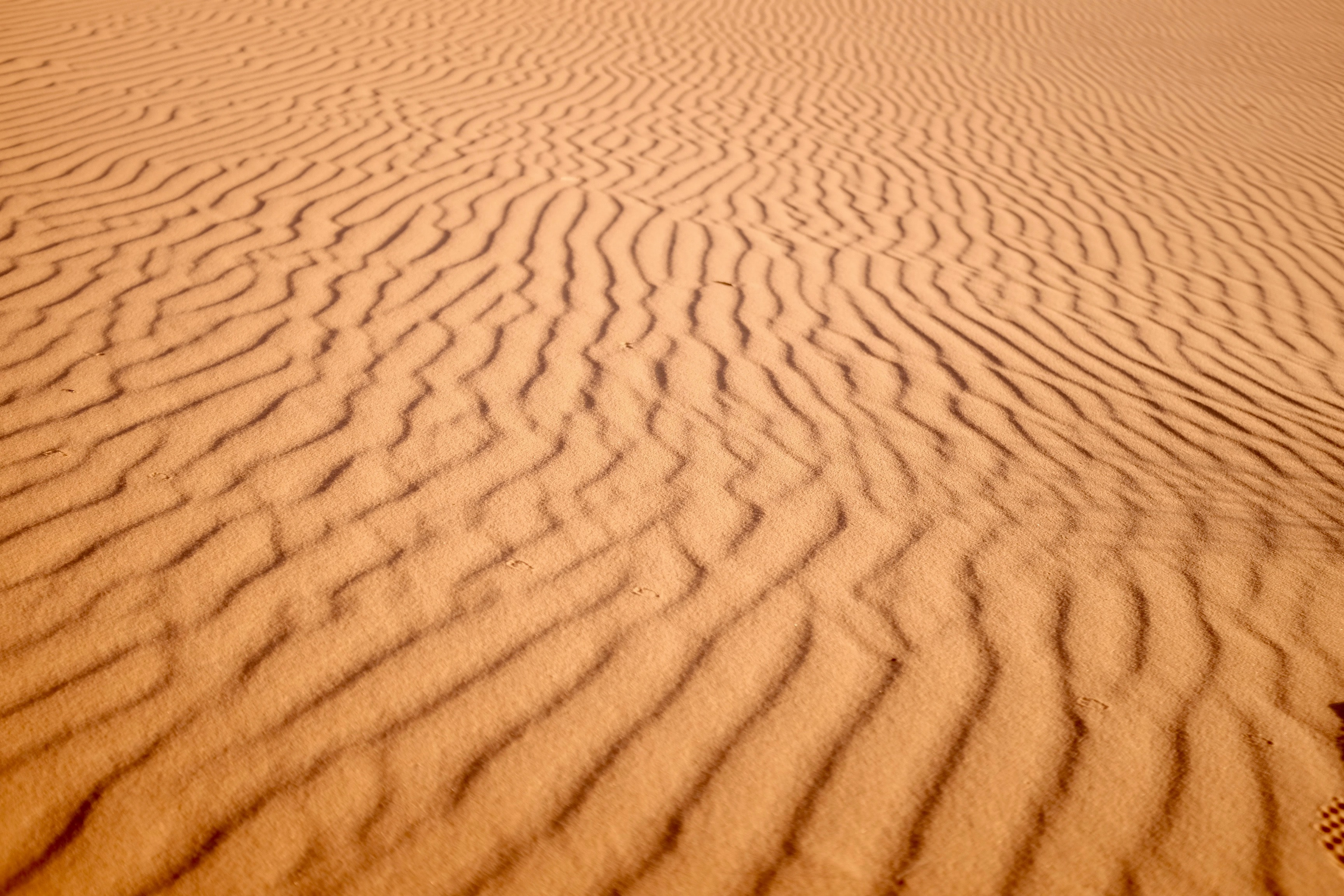 Wind forms ripple patterns in the sand of the Sahara Desert