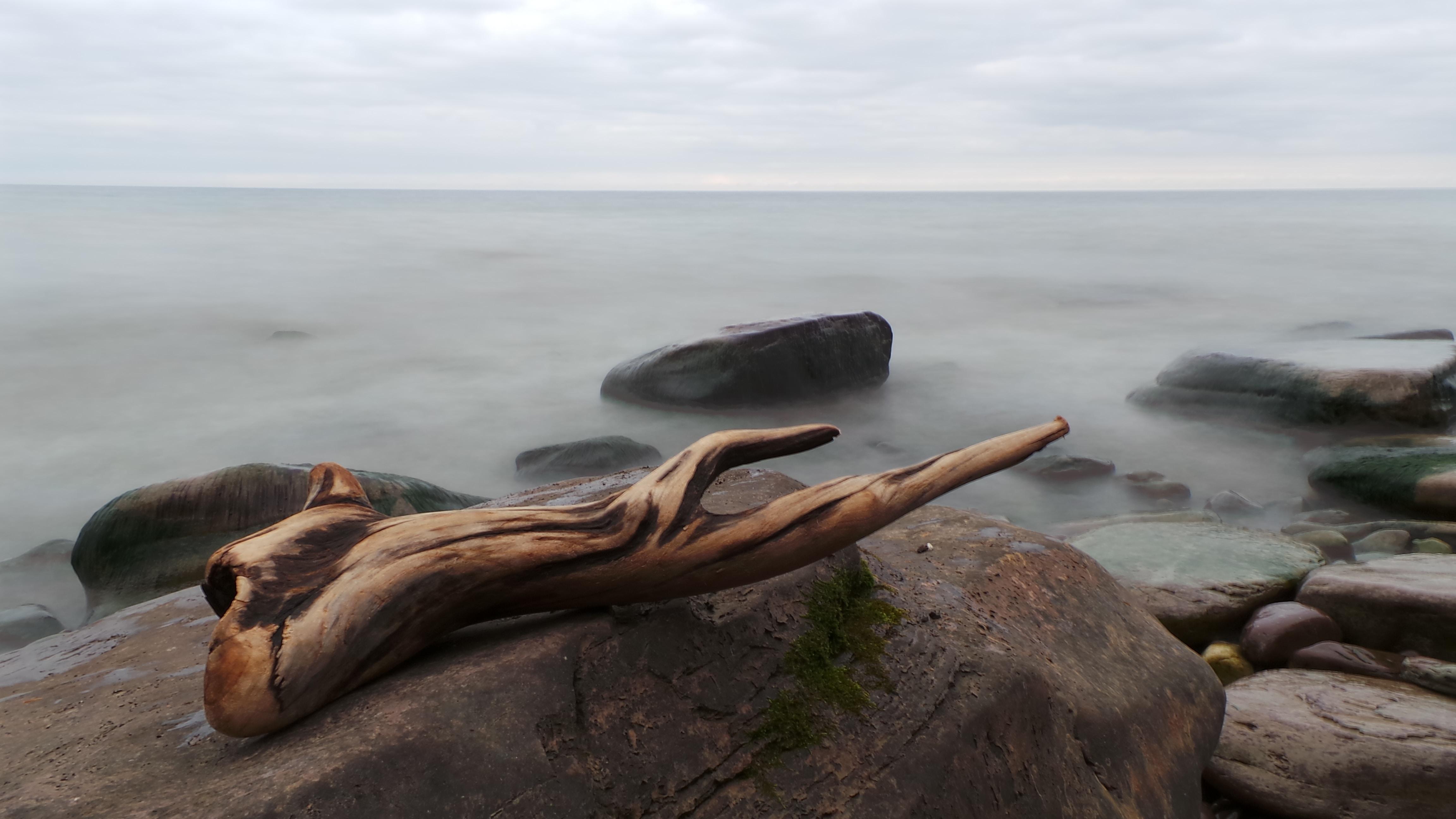 brown wooden tree branch on seashore rock