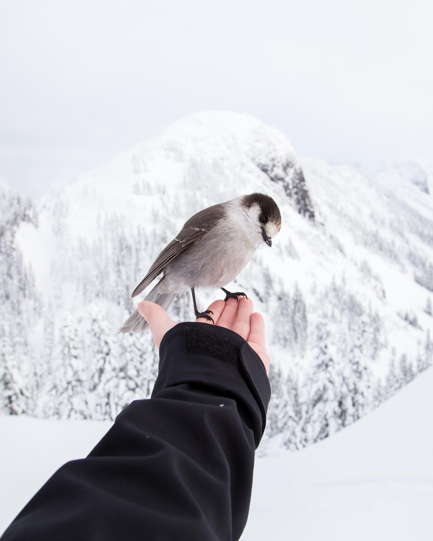 Goodbye, little bird.  love stories