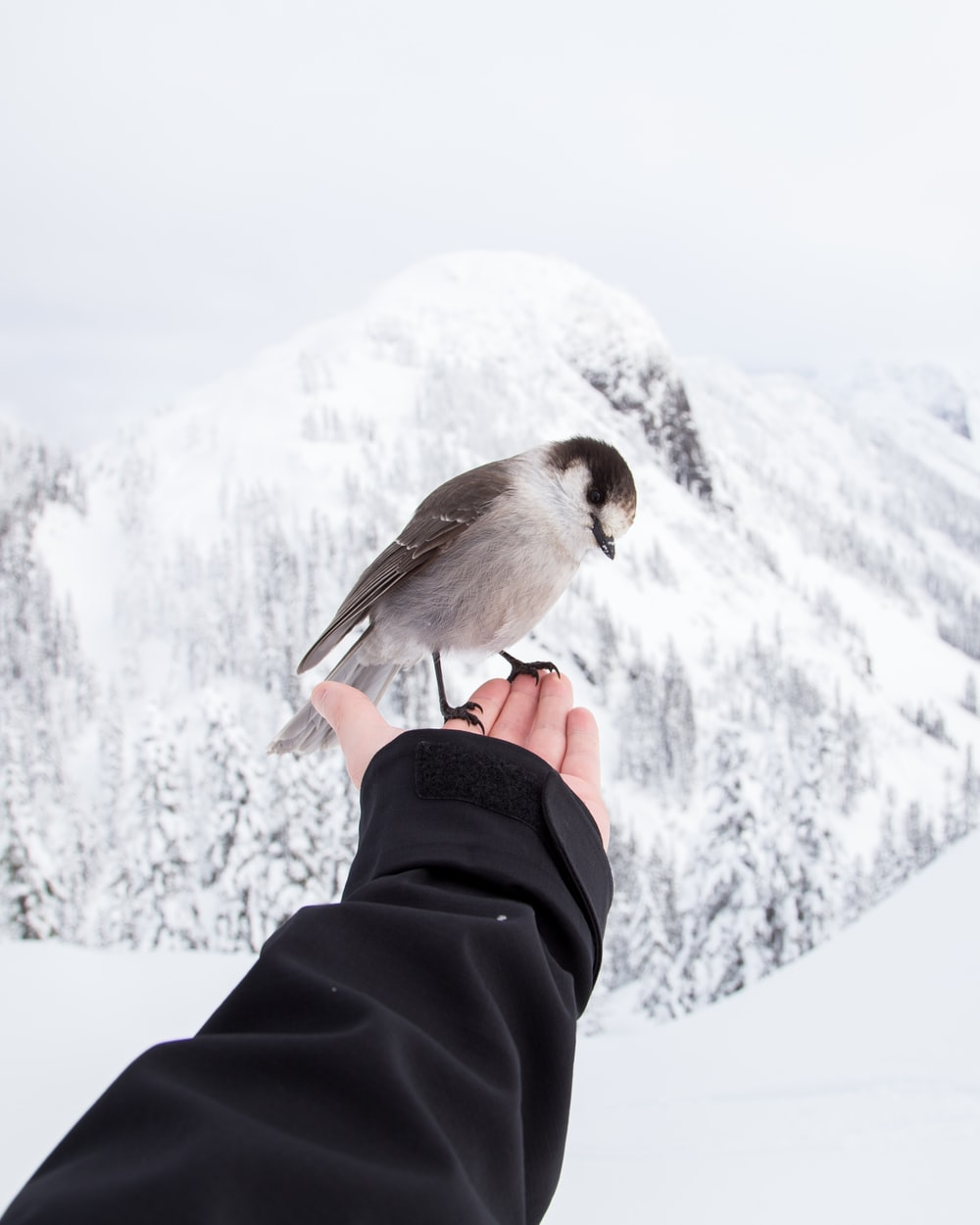 brown and white bird standing on left hand of person