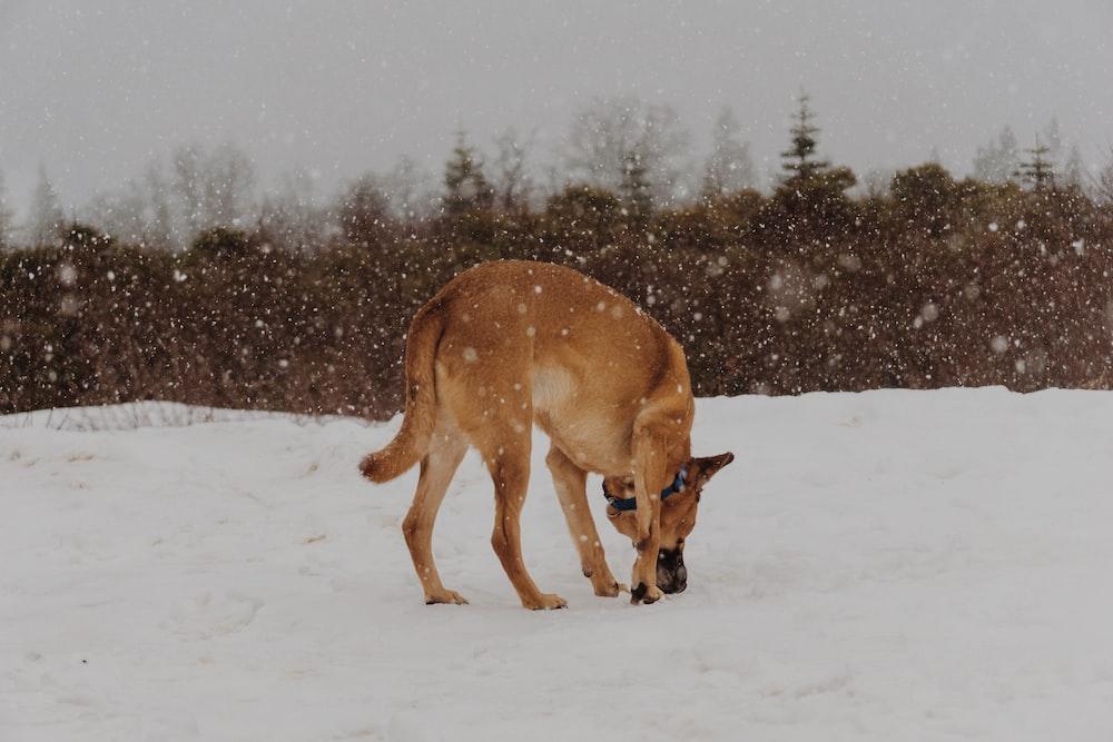 brown animal on snow surface