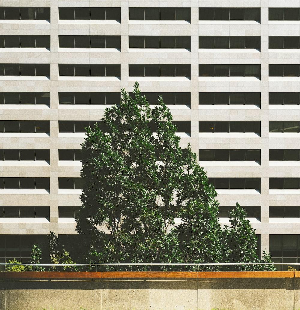 green tree beside concrete building
