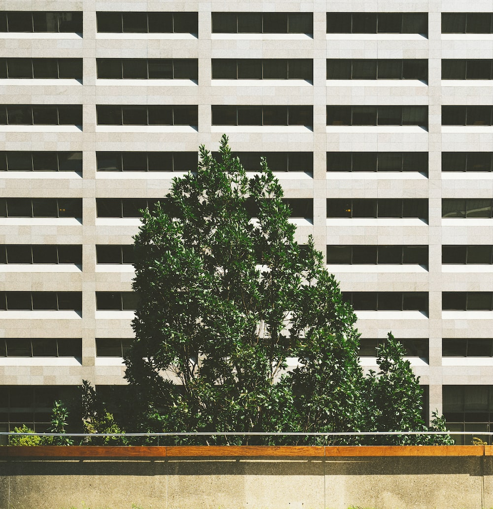 green tree beside concrete building