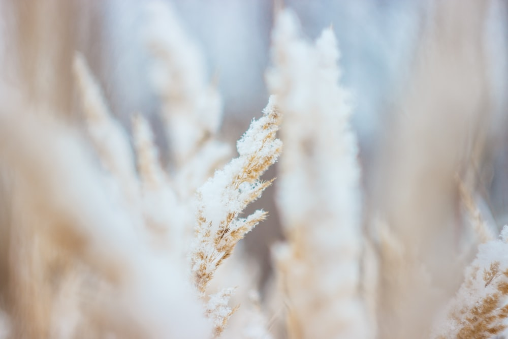 shallow focus photography of brown grass