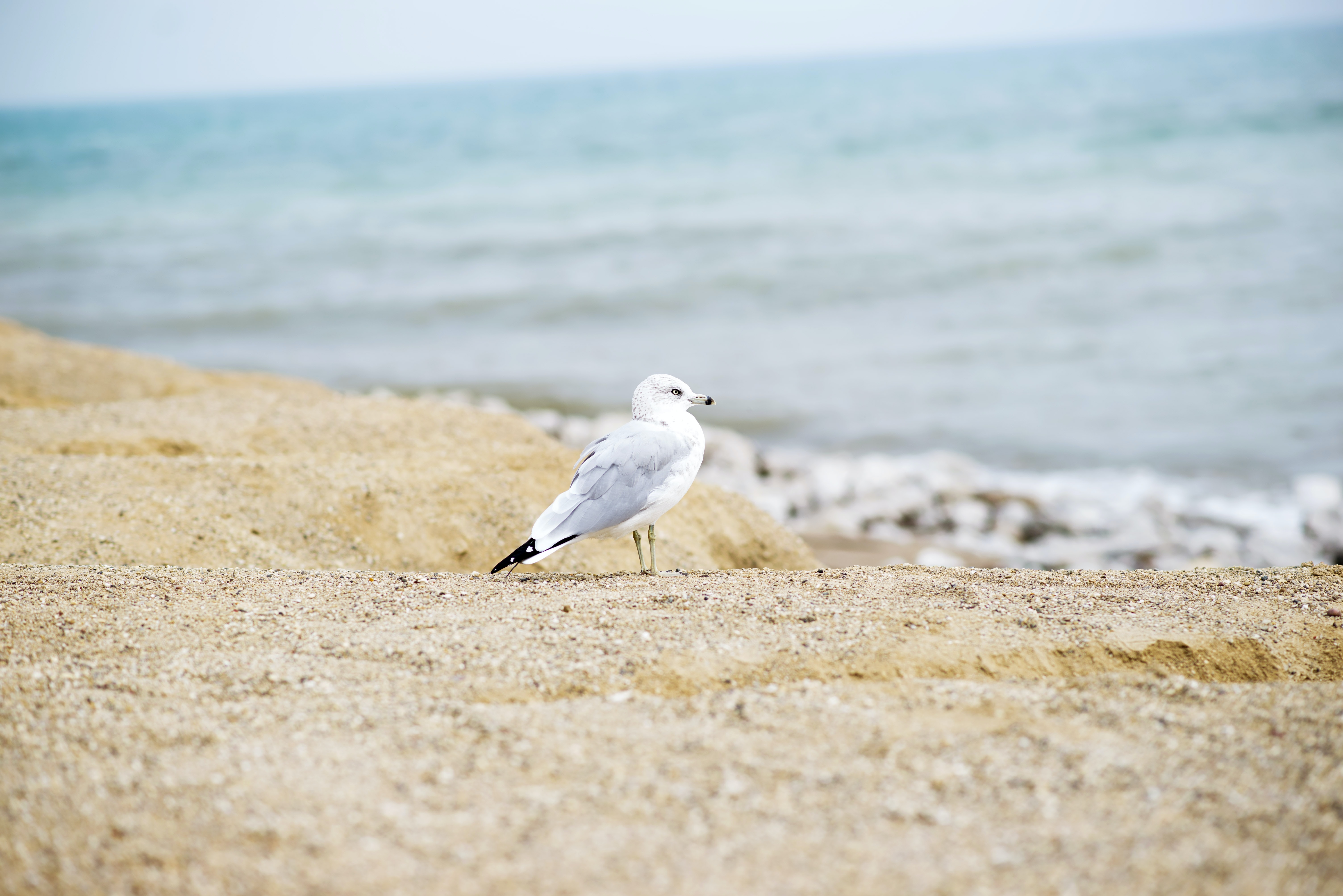white seagull on seashore