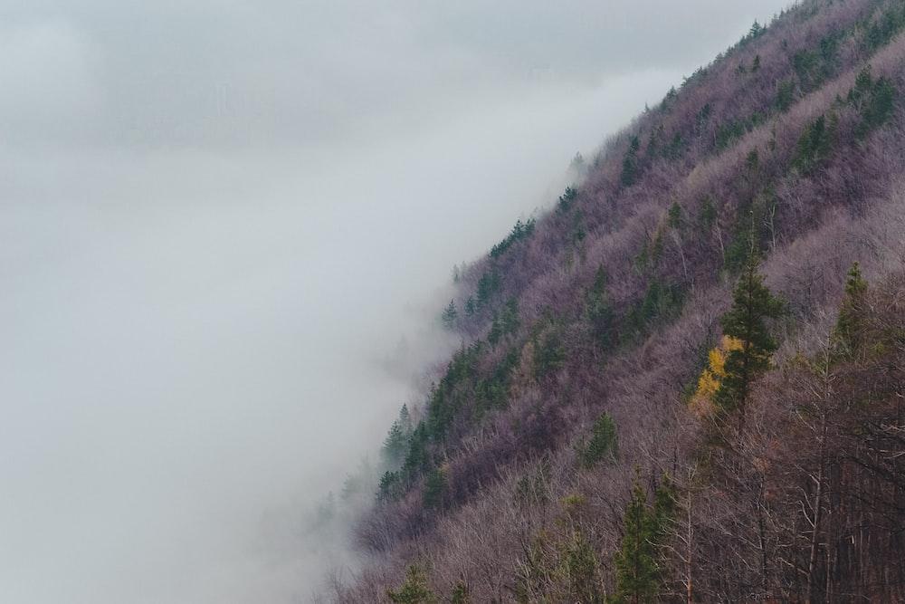 foggy mountain at daytime