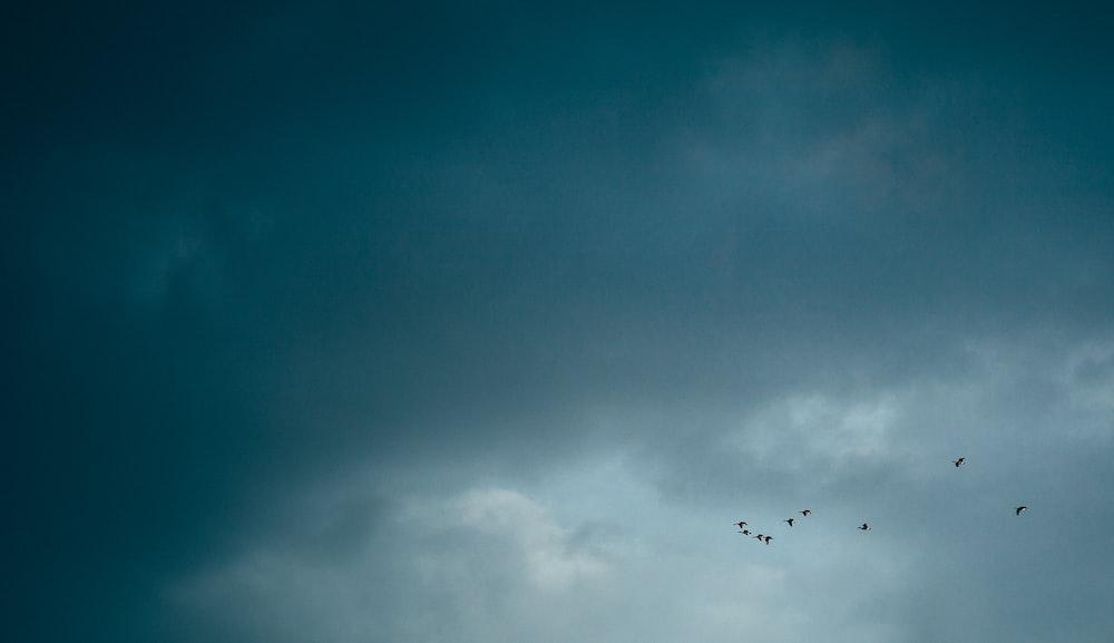 flock of bird flying during daytime