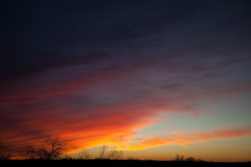 silhouette of trees under orange skies