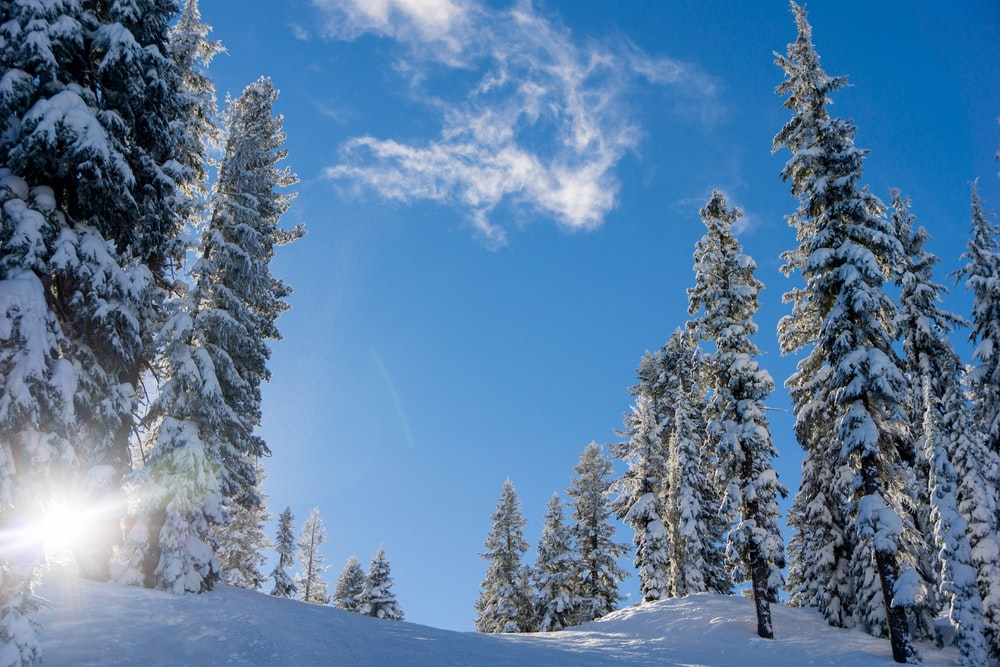 field and trees covered with snow under blue and white sky during daytime