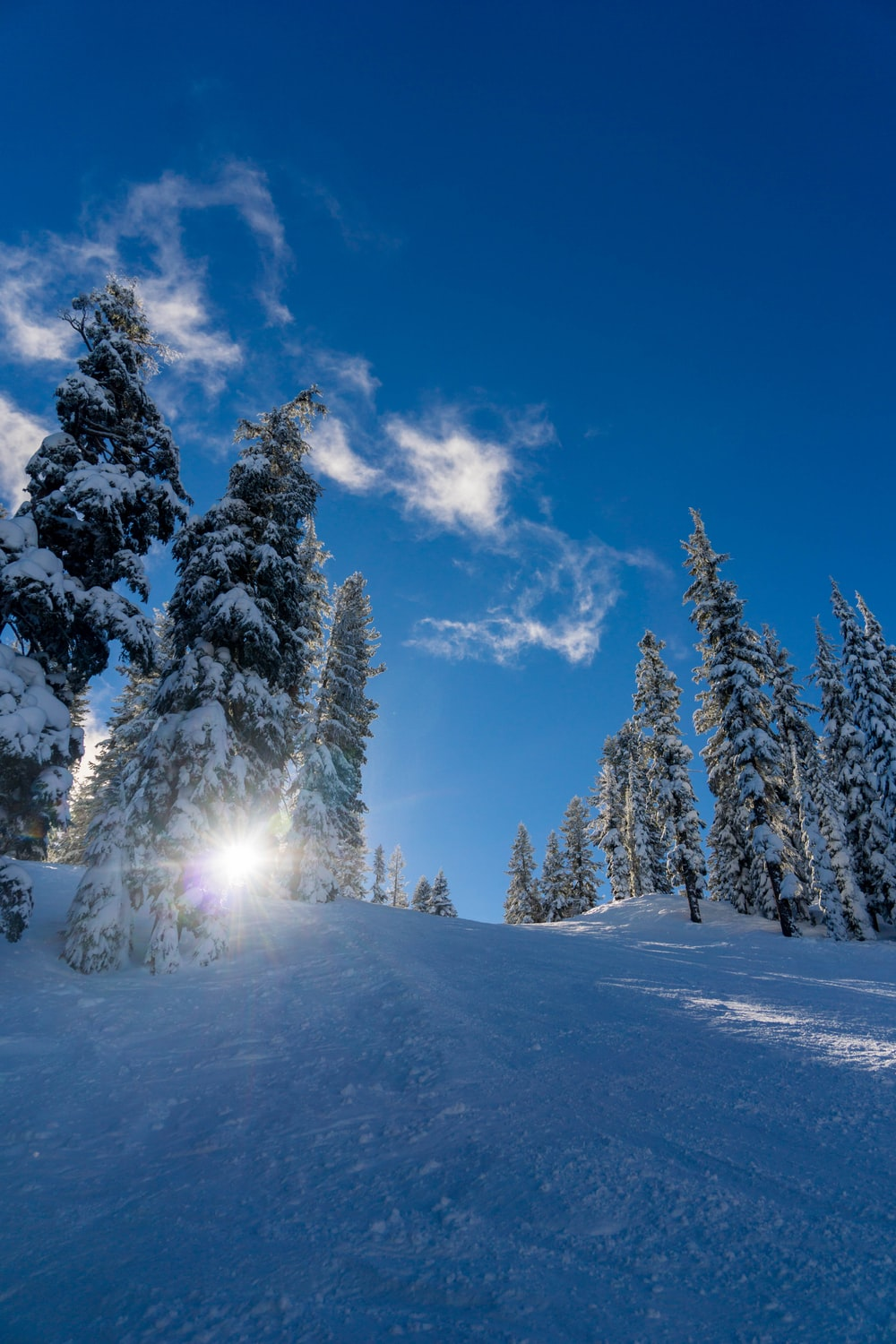 forest trees covered by snow
