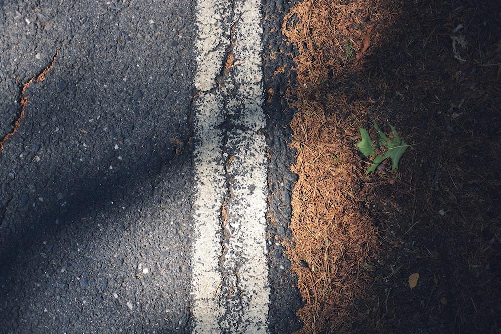 asphalt road beside green leafed plant