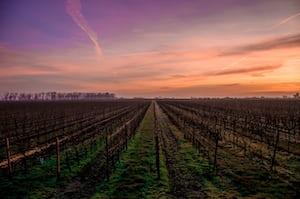4603. Bor,szőlő, borászatok