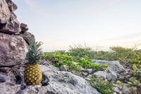 pineapple fruit on top of grey rock