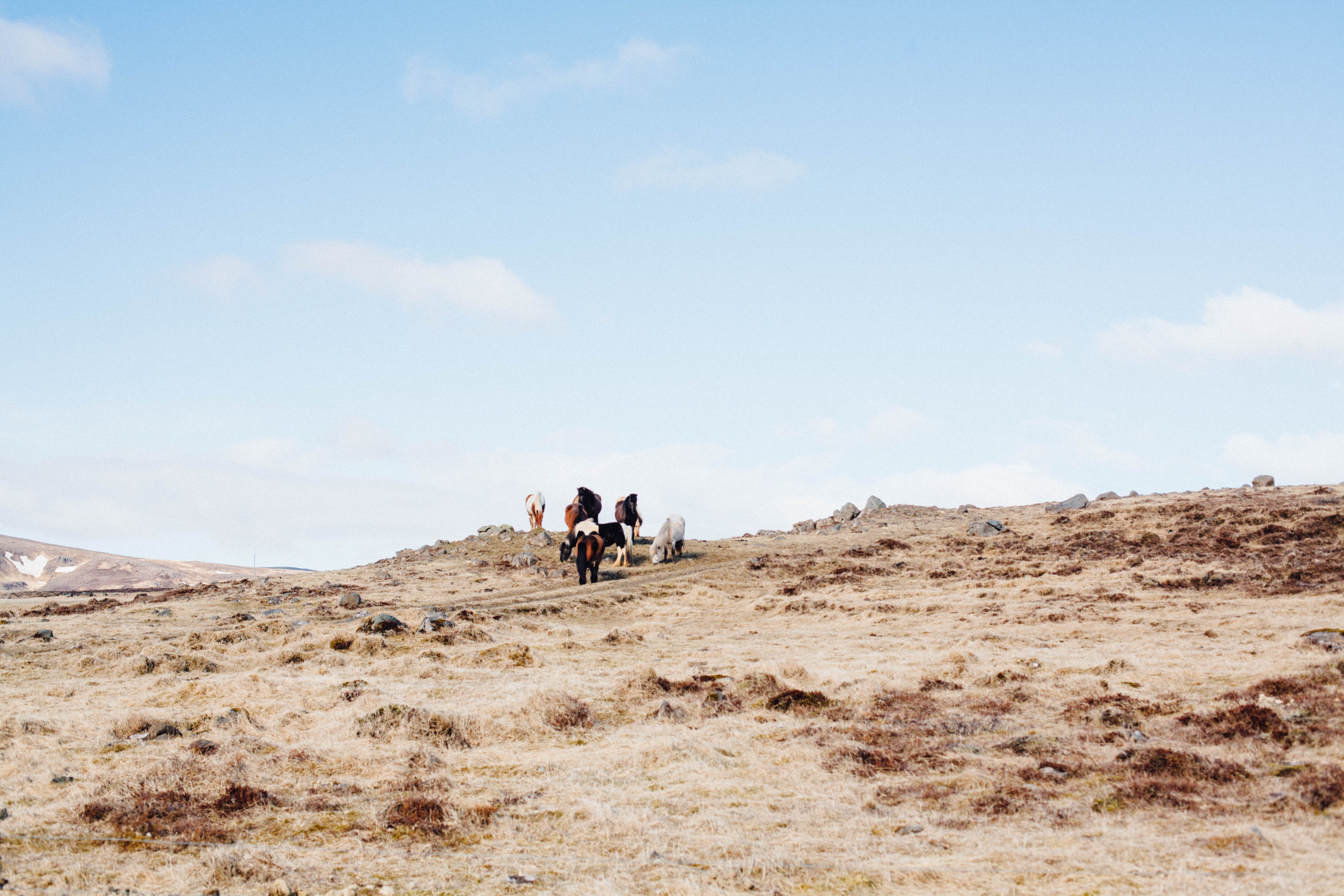 A distant shot of a group of ponies on a rocky plain