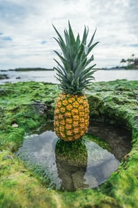 yellow and green pineapple on green rock surrounded by water during daytime
