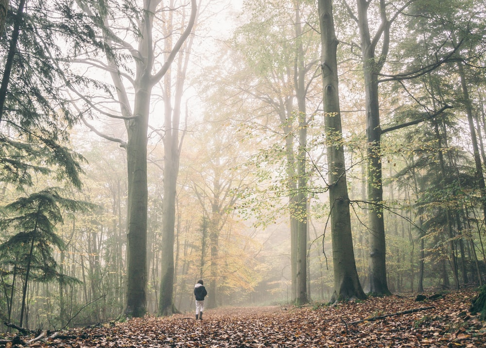 person in the middle of fogged forest