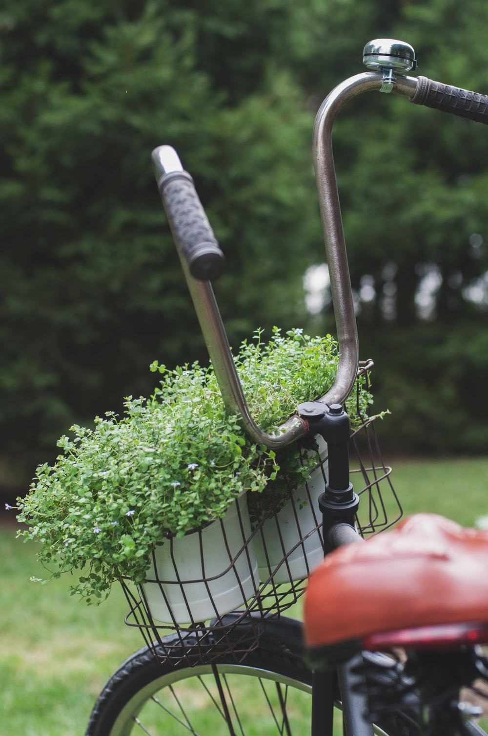 close-up photography of black bicycle carrying pot of green plants
