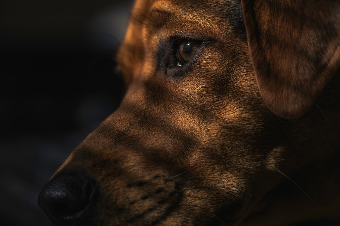 Dog Eye Pet And Canine Hd Photo By Christopher Harris