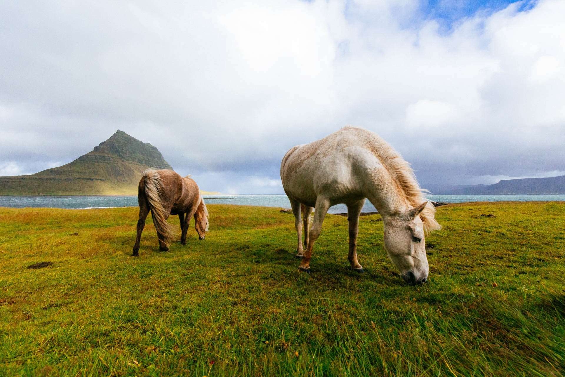 Two horses grazing on green and yellow water with a lake and a steep hill in the background
