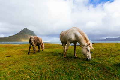Two horses grazing by a lake