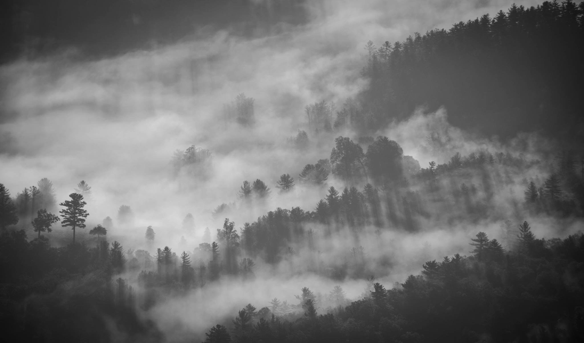 A black-and-white shot of trees enveloped in thick fog