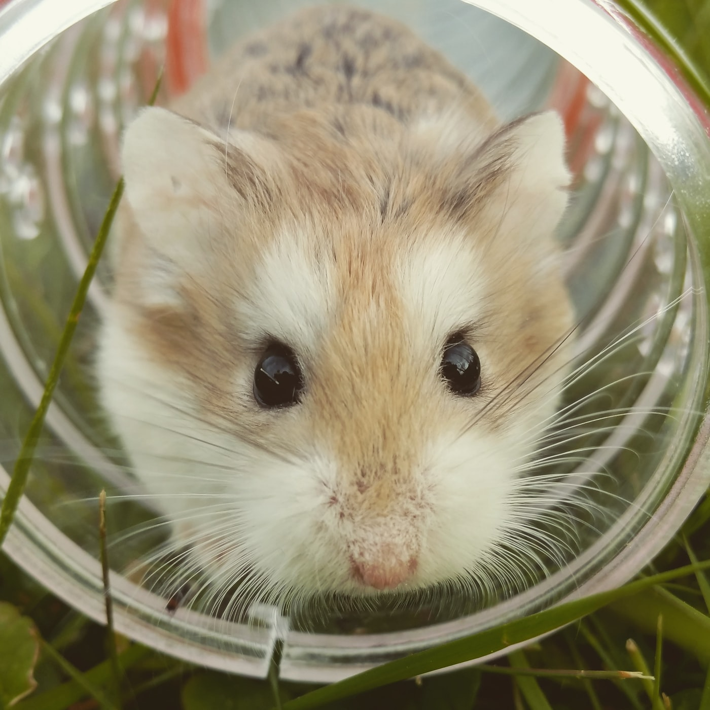 a hamster inside a bottle