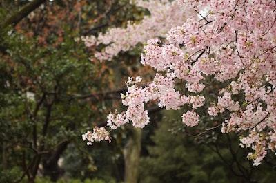 pink flowering tree closeup photography at daytime