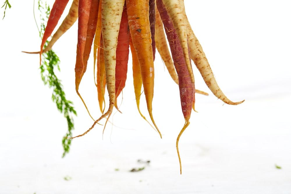 carrots and radishs