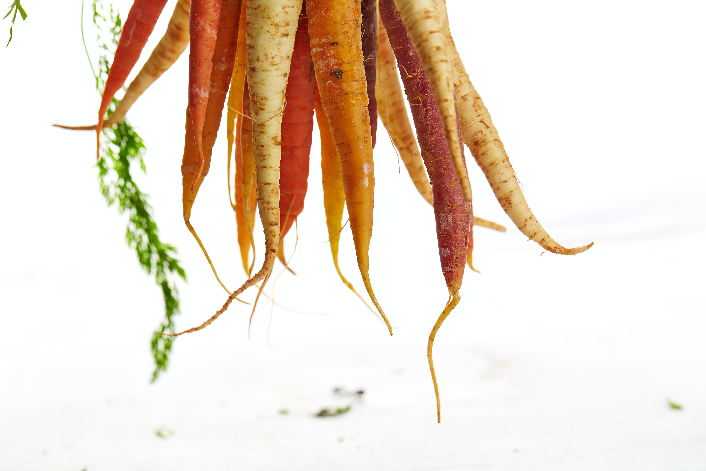 Please Appreciate My Carrot. veg stories