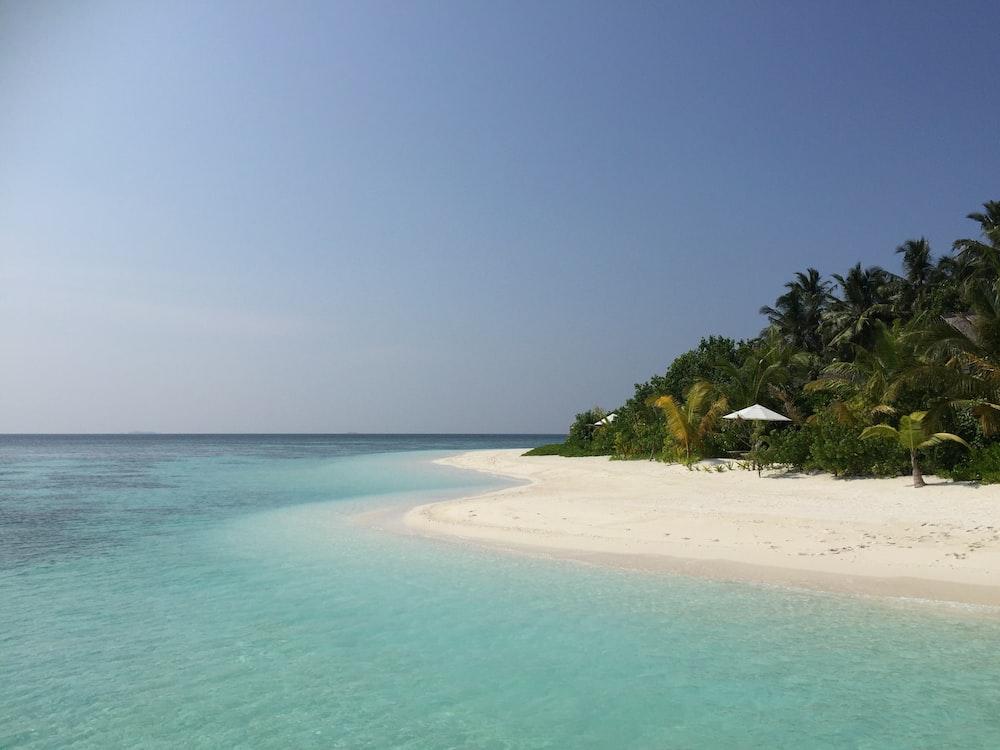 palm trees beside shoreline